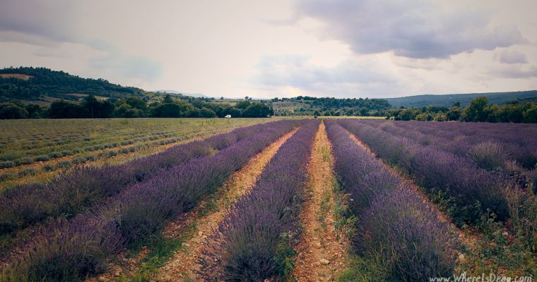 The lavender chase