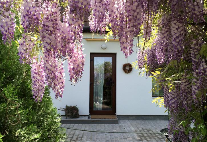 Garden House in Timisoara, Romania